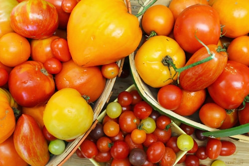 Sicilian Red Sauce with Heirloom Tomatoes